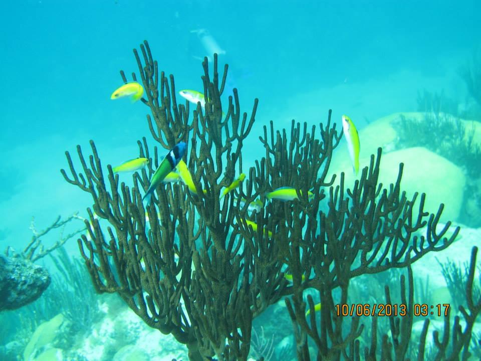 Bermudas Reef