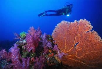 Come Dive Bermud