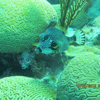 Tropical fish!